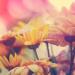 【泉里香の美容法③】透明感ある美肌を作る愛用コスメ・12個のリスト。スキンケア化粧品は使い分けがポイント